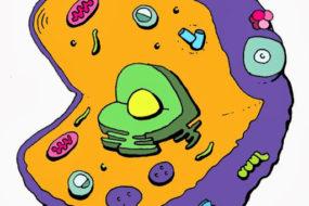Cell explorers logo
